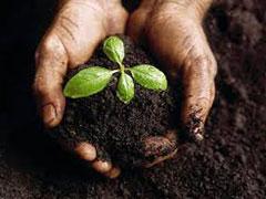 Subproducto otros Sólidos orgánicos agroalimentarios