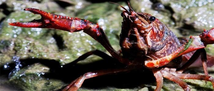 bioplásticos a partir de cangrejo